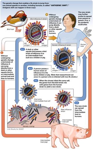 virus A(H1N1), 3