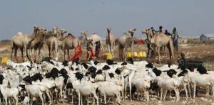 xoolaha Somalia